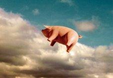Pink Floyd Pig
